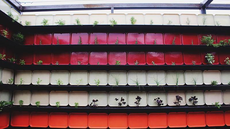 vital root plant wall