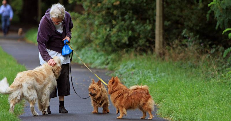 senior lady dog walker