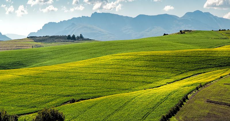 green pasture hills