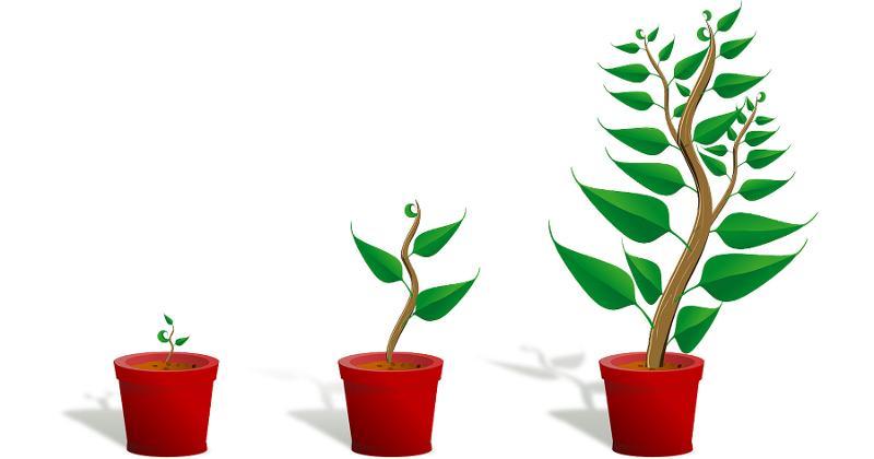 growth plants
