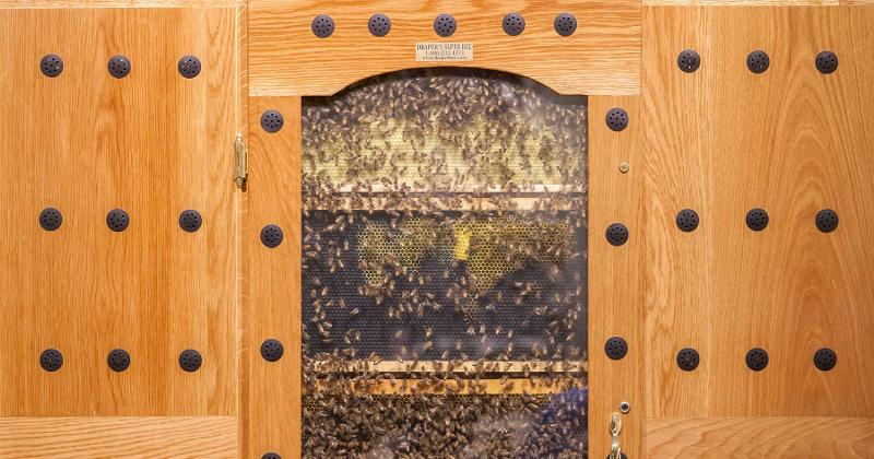 lazy acres bees