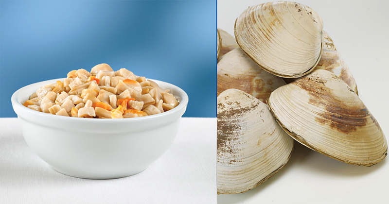 surf clams
