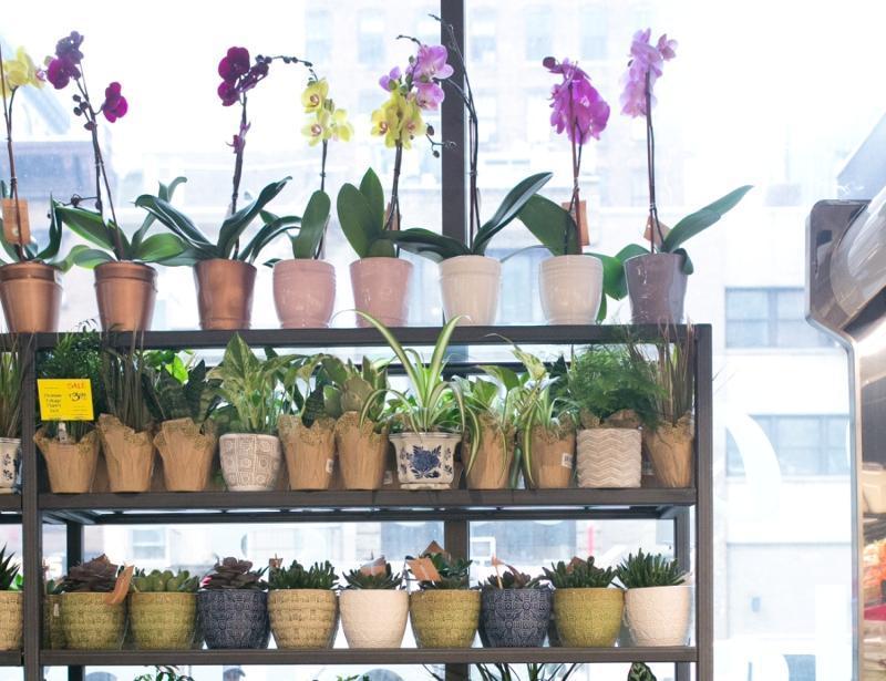 Whole Foods Market Flowers