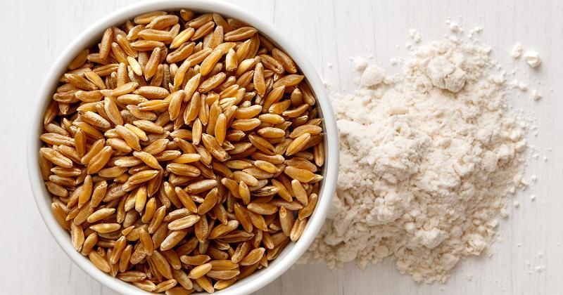 Khorasan Wheat