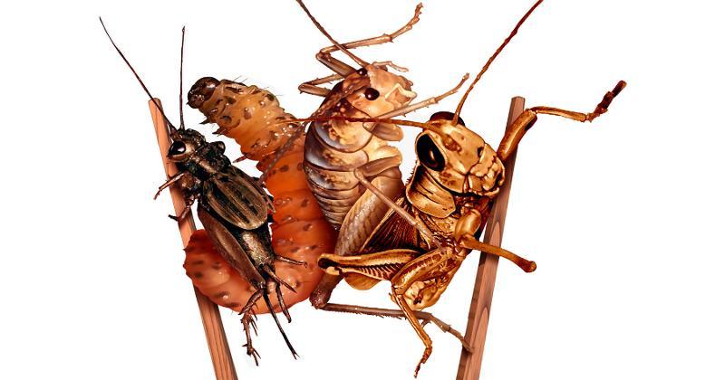Cricket snacks