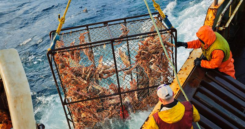 Hauling Crab Pot