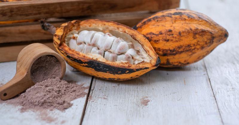 cacao fruit powder