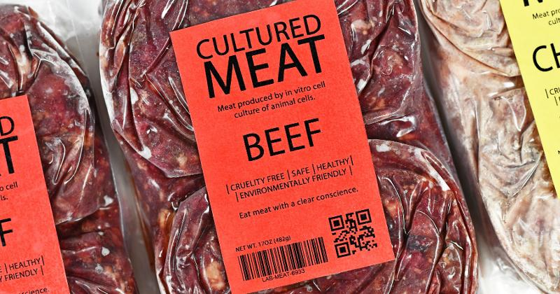 cultured beef