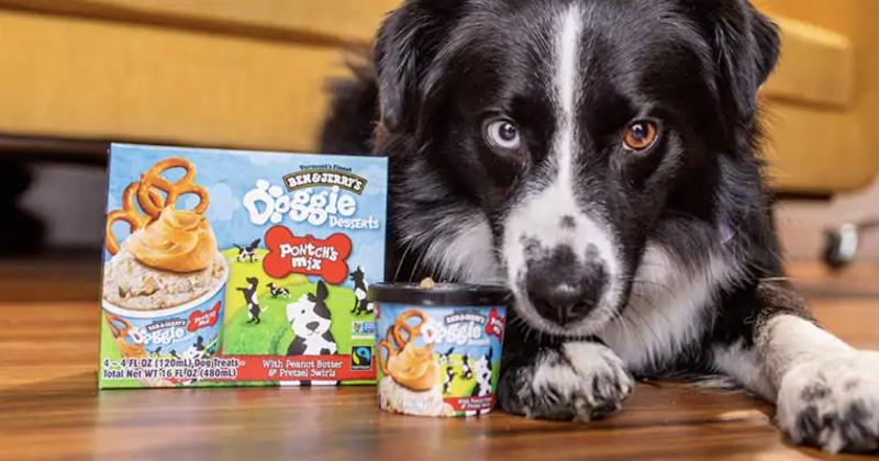 Ben & Jerry's dog ice cream