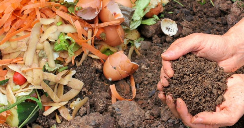 Close up of compost