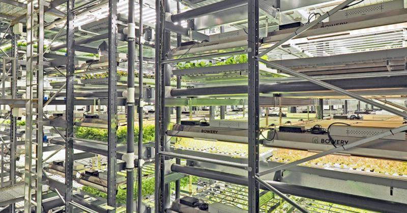 Bowery indoor farm