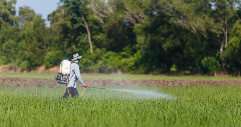 A farmer spraying pesticide on crop.