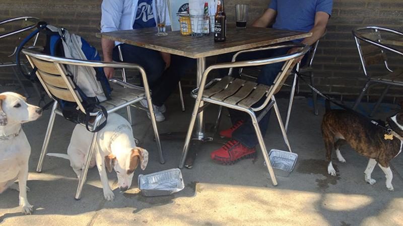 dog restaurant patio
