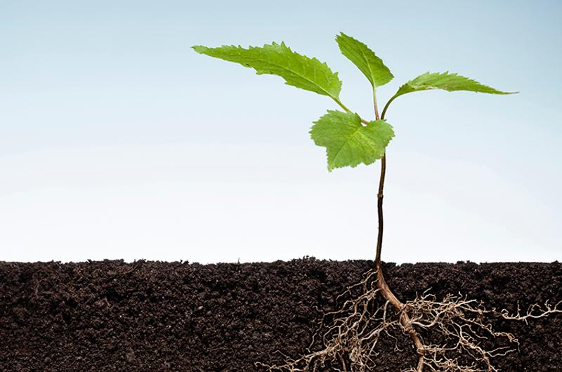 plant roots ground