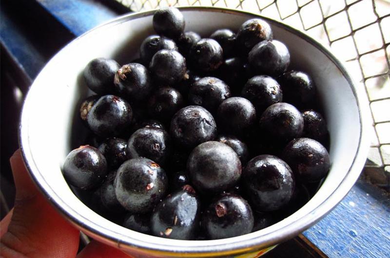 acai berries cup