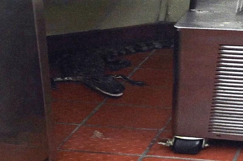 alligator restaurant