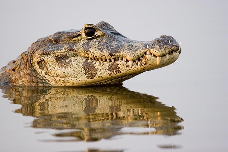 caiman water