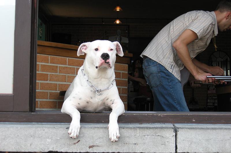 dog cafe window