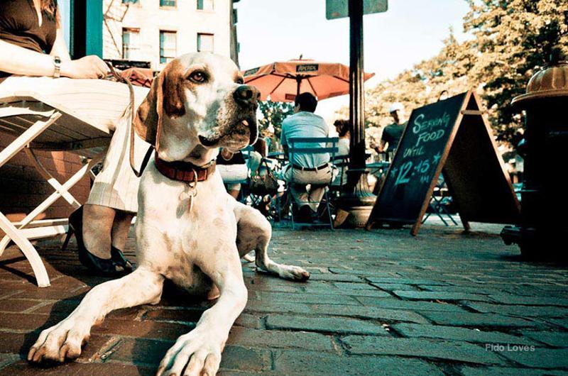 dog friendly restaurant patio