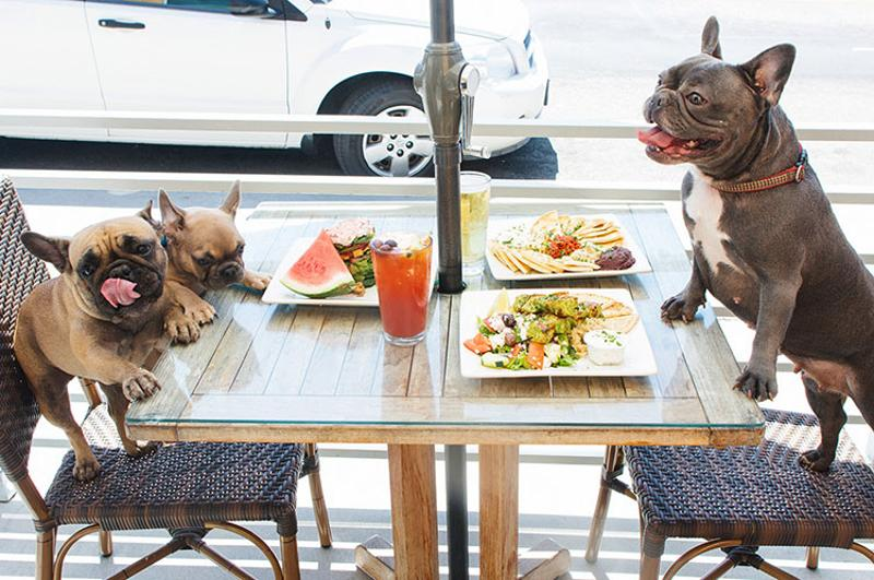 dogs at restaurant