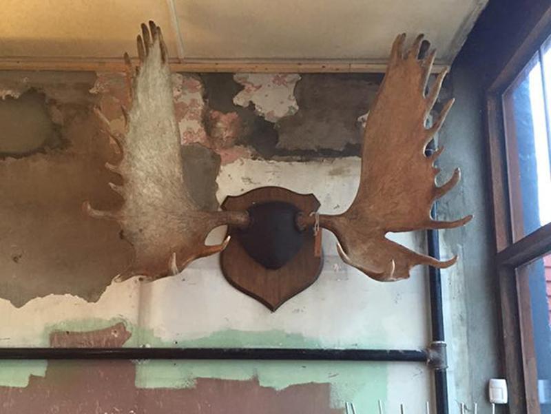 original cement walls moose antlers