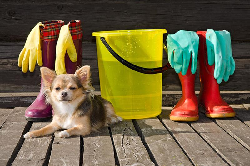 pet safe cleaning supplies