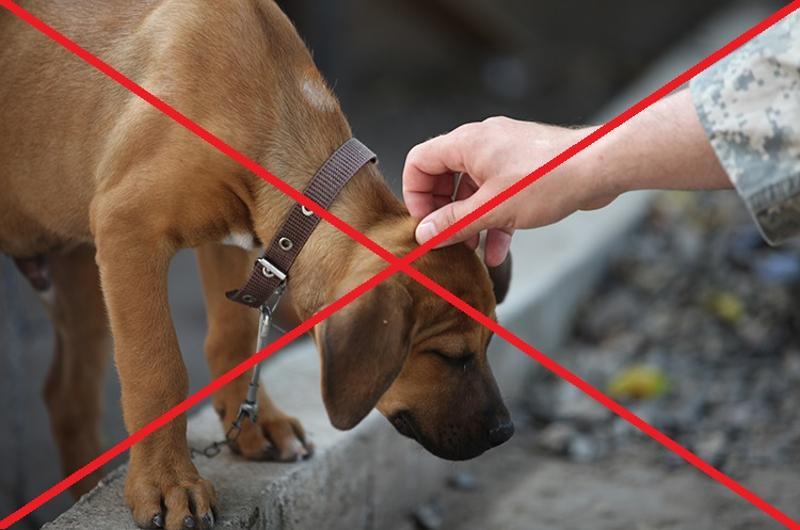petting dog