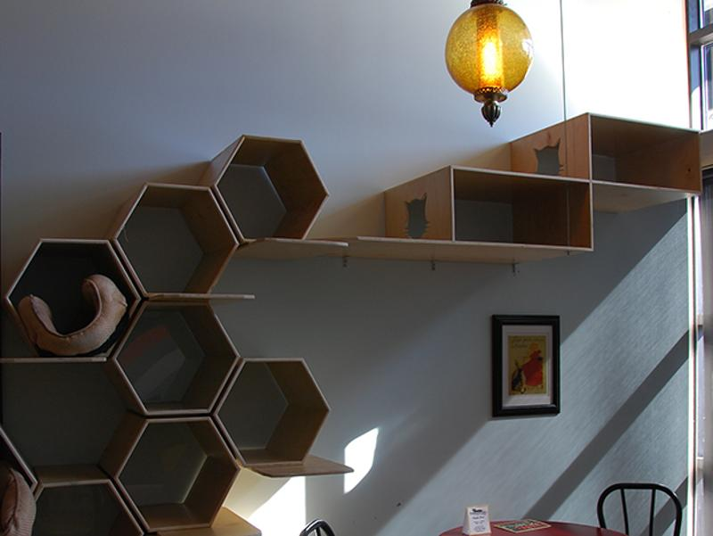purringtons cat maze