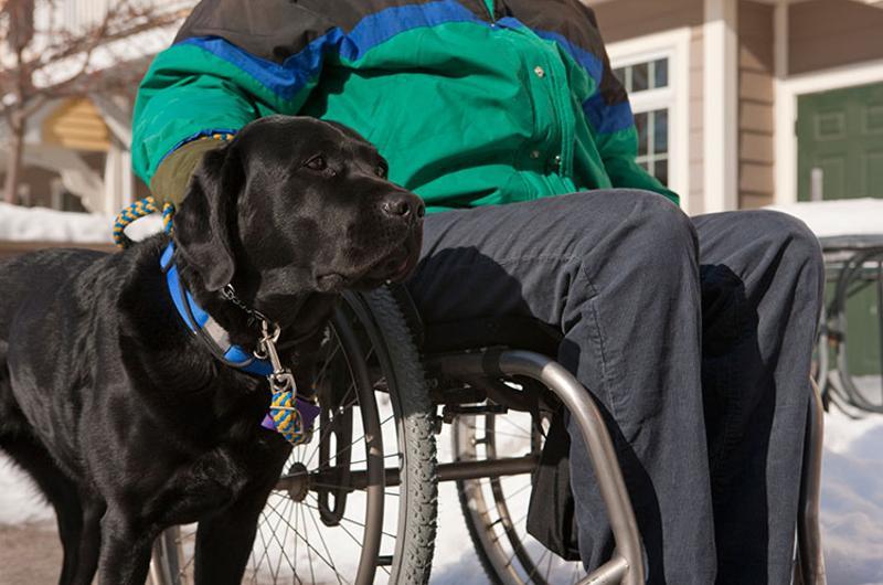 service dog wheel chair