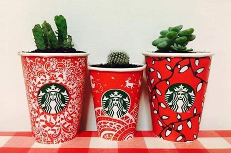 starbucks cactus cups