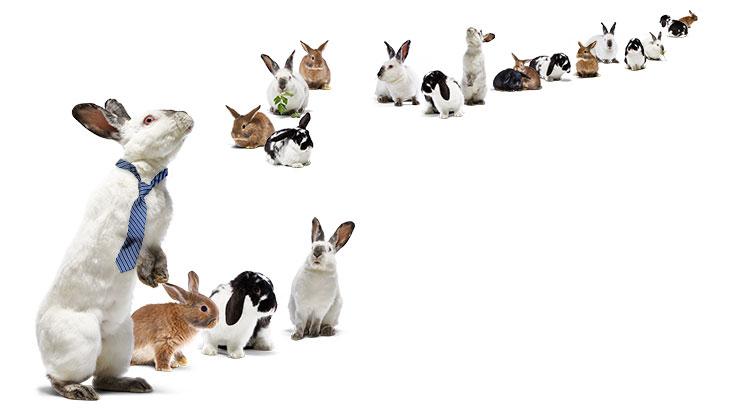 bunnies multiplying