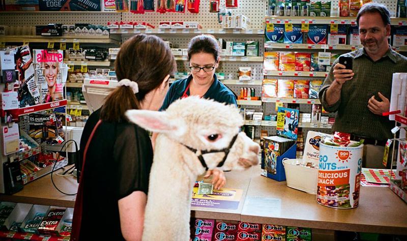 Alpaca in a c-store