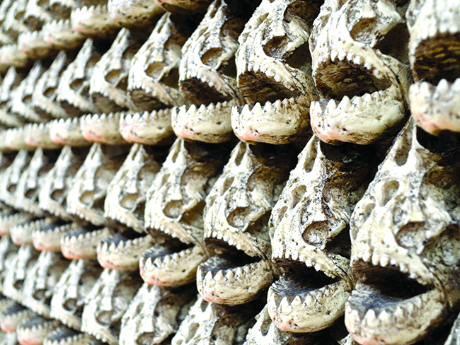 faux-piranha-skulls