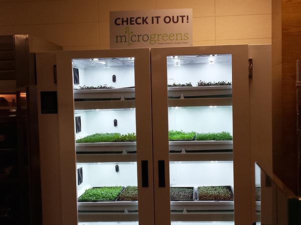 hydroponics microsoft