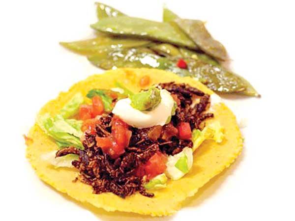 cricket tortilla