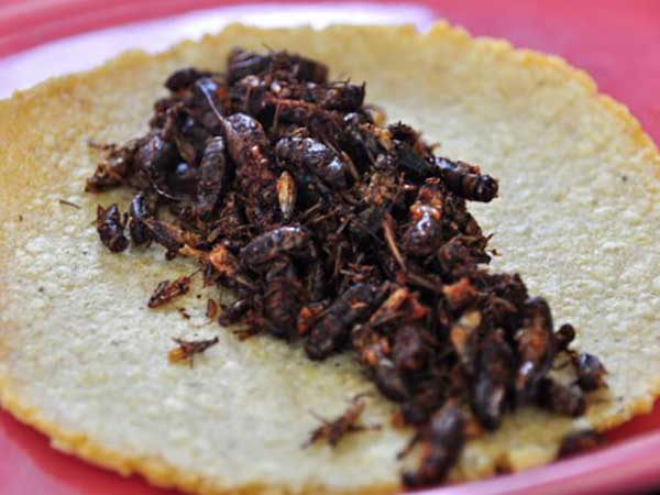 cooking crickets
