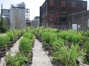 Going Green, Brown-Foreman, rooftop garden