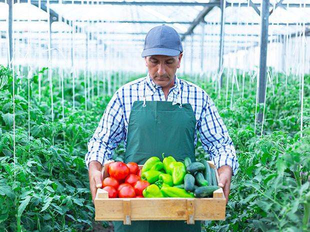 farmer produce