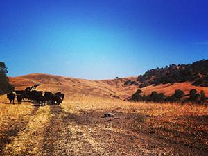 kevin lester ranch