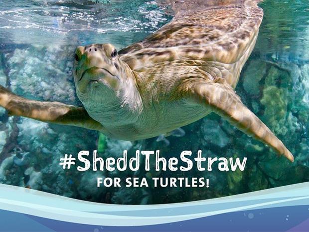 Shedd Aquarium White Sox Shedd The Straw