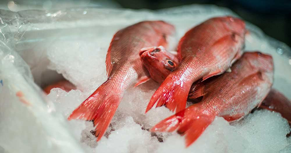 red snapper ice