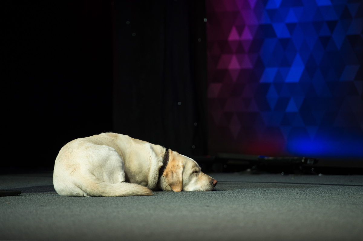 Lone Survivor, Marcus Luttrell's dog at Restaurant Leadership Conference, RLC